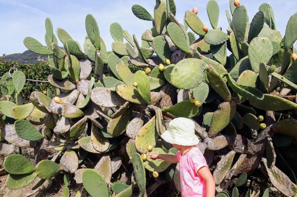 Cestování s dětmi na Elbu i kaktusy potkáte.