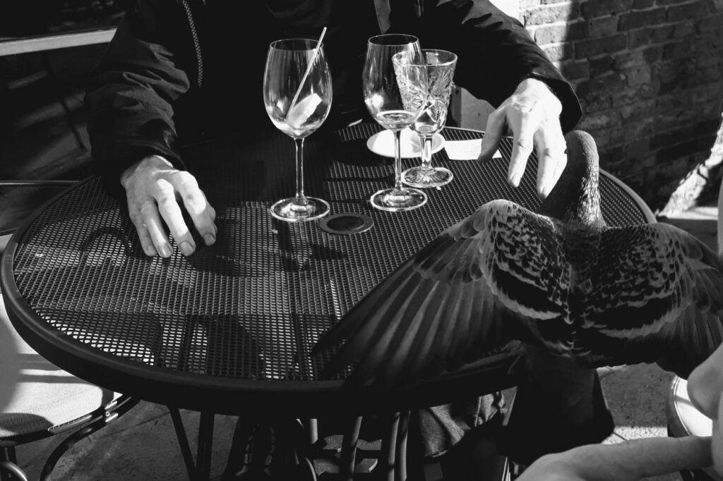 Pokud si nehlídáte občerstvení na stole v Benátkách, může vám ho ukořistit i holub.