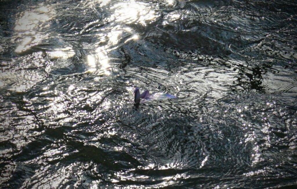 Pouštění po řece vlaštovka s vizualizací a záměrem
