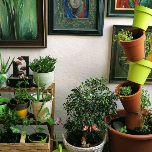 Permakultura a vertikální zahrada v bytě.